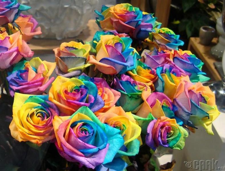 Тод өнгөтэй цэцэг