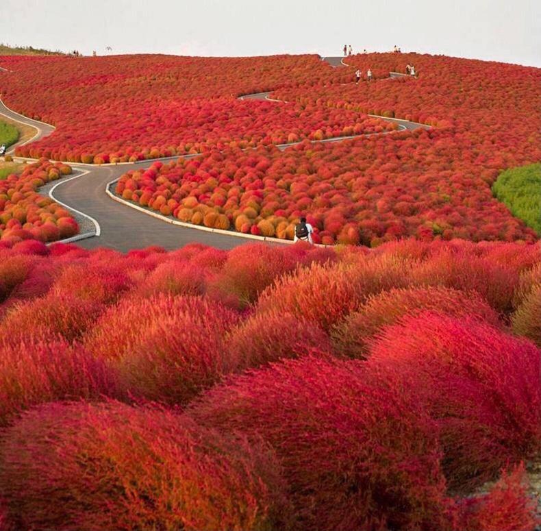 Хитачигийн далайн эрэг орчим, Япон