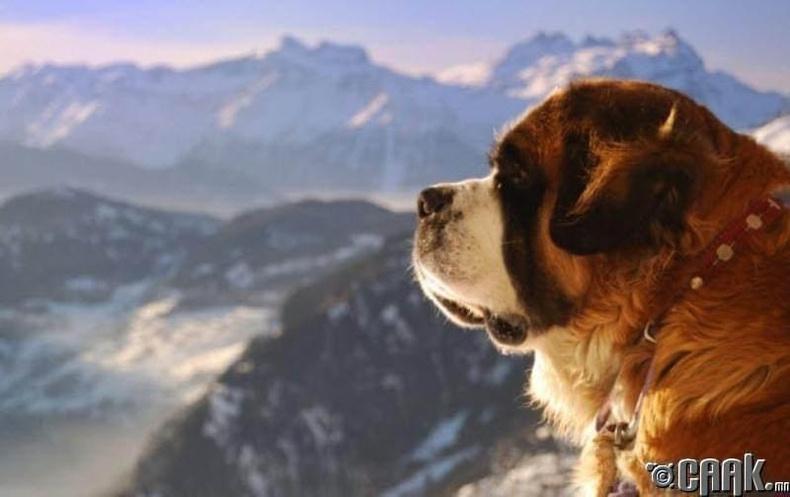 Нохойны татвар (Швейцарь)
