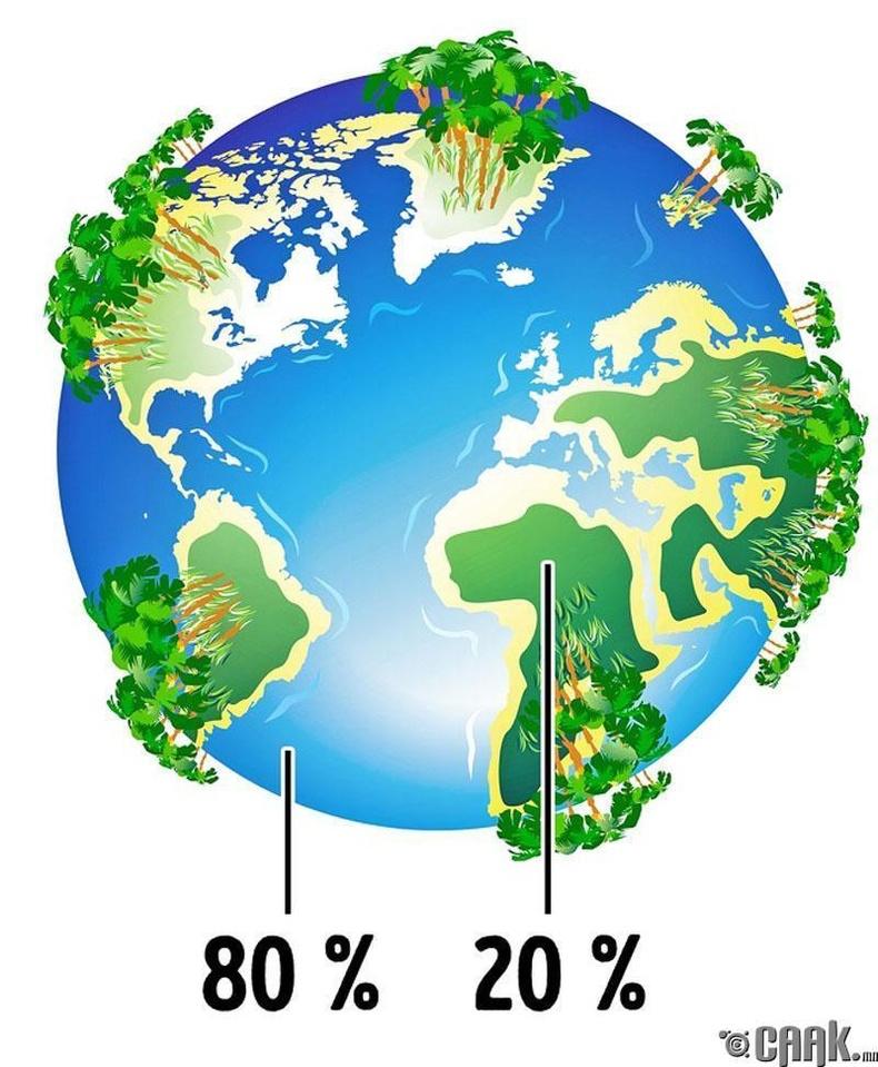 Дэлхийн ихэнх хүчилтөрөгч модноос биш далайгаас үүсдэг
