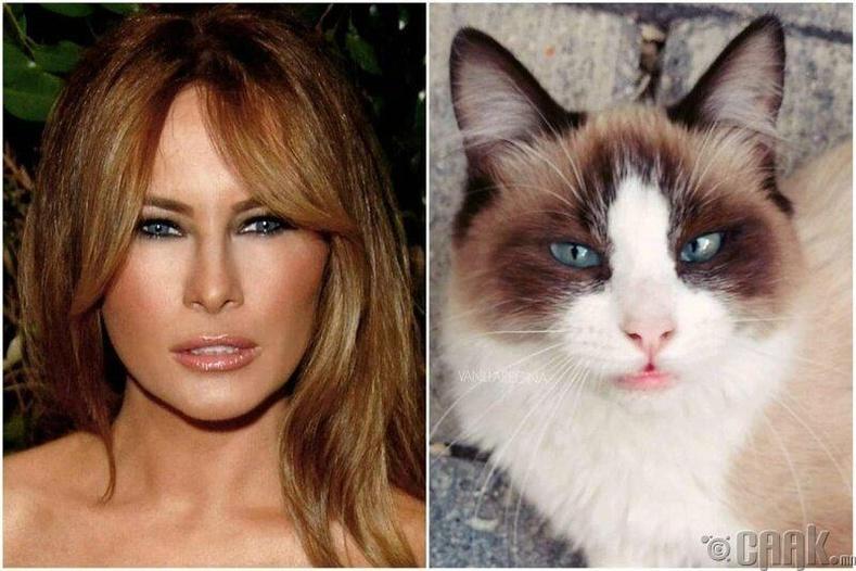 """""""Эгчийн маань муур Меланиа Трамптай адилхан харагдаад байгаа юм даа"""""""