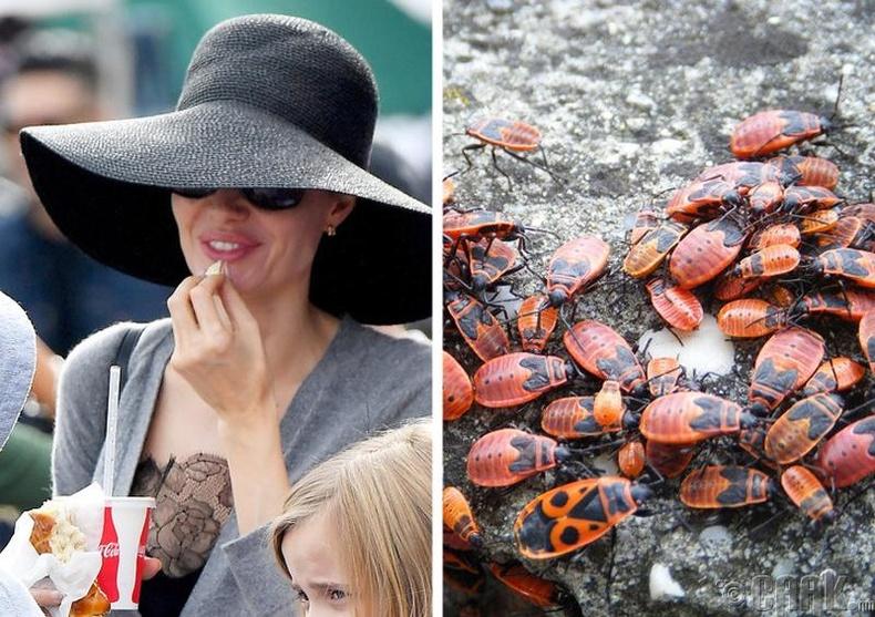 Анжелина Жоли (Angelina Jolie) цох хорхой идэх дуртай