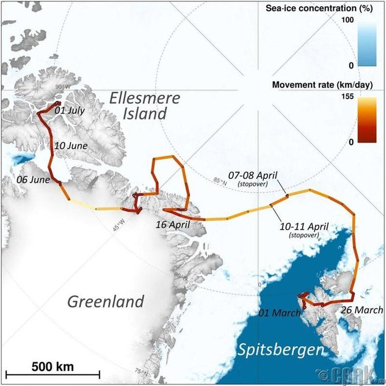 Арктикийн үнэгний 3 сарын дотор туулсан зам