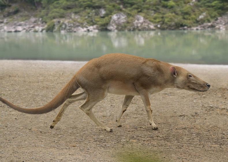 Халимын дээд өвөг, балар эртний Indohyus хэмээх амьтан