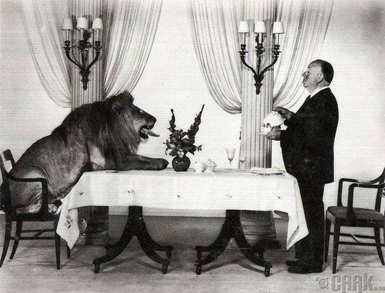 """Кино найруулагч Альфред Хичкок (Alfred Hitchcock) """"Metro-Goldwyn-Mayer"""" кино студийн бэлгэ тэмдэг болсон арслантай цай ууж байгаа нь - 1958 он"""
