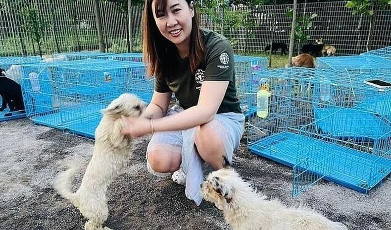 Хятадын нохойн мах идэх фестивалиас 60 гаруй нохойг аварч чаджээ