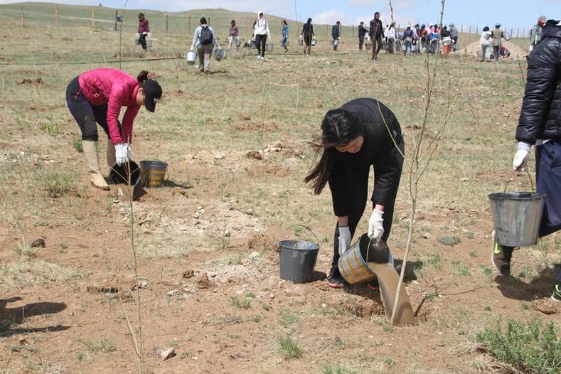Худалдаа, хөгжлийн банкны хамт олон мод услах аянд 3 дахь жилдээ нэгдлээ