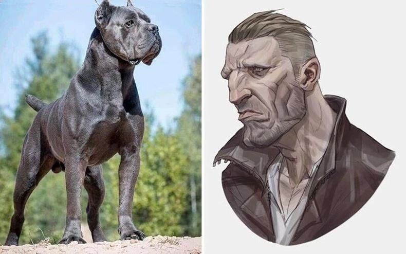 Cane Corso үүлдрийн нохой