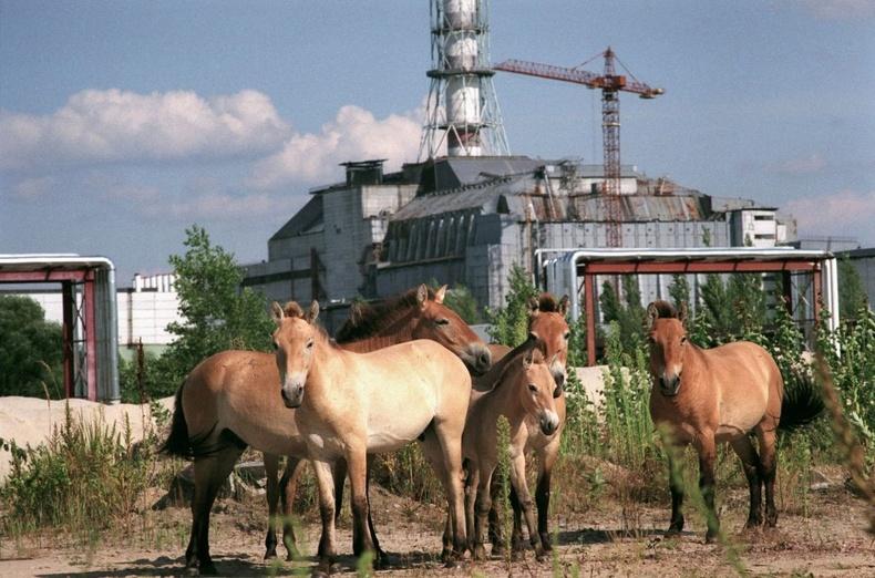 Чернобылийн хориотой бүсийн нууц камерт буусан амьтад