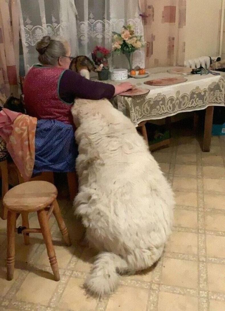 Эмээ том нохой тэжээгээд байна уу? Цагаан баавгай тэжээгээд байна уу?