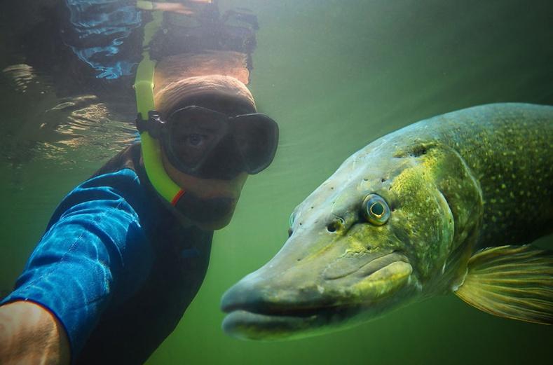 Сая сая хүмүүсийг алмайруулсан селфинүүд