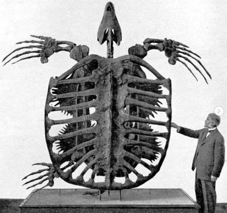 Түүхэн дэх хамгийн том яст мэлхийний араг ясыг танилцуулж байна (1902)