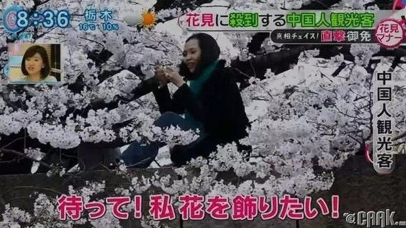 Сакурагийн модон дээр авирсан бүдүүлэг бүсгүйчүүд