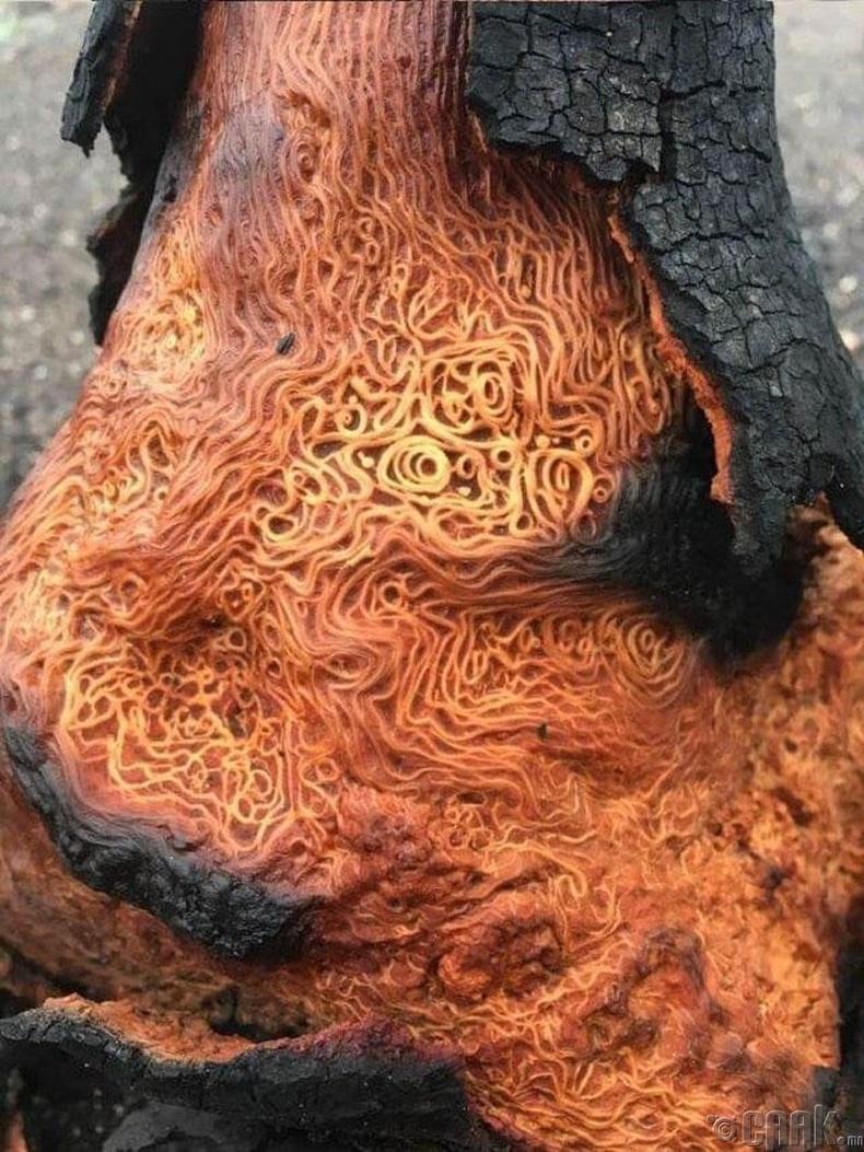 Шатсан модны үндэс