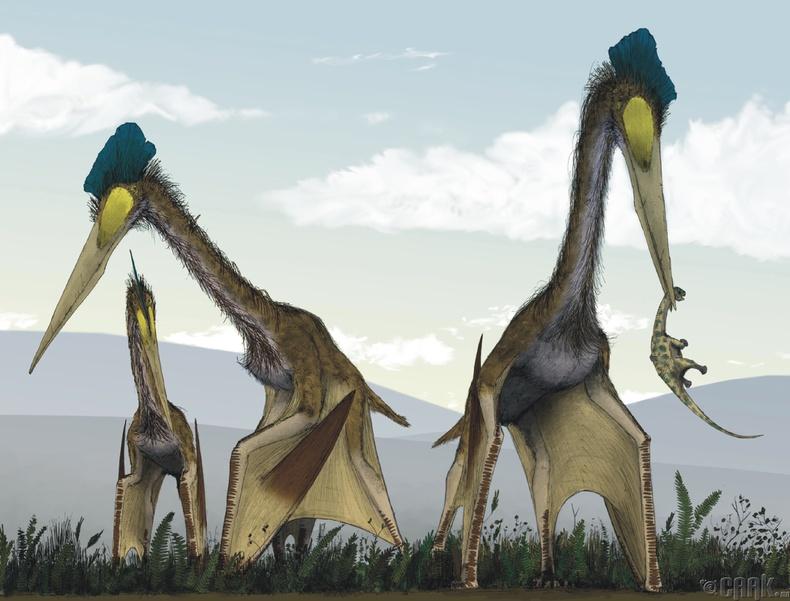 """Quetzalcoatlus"""