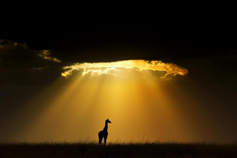 Африкийн Серенгетийн тал нутгийн өглөө