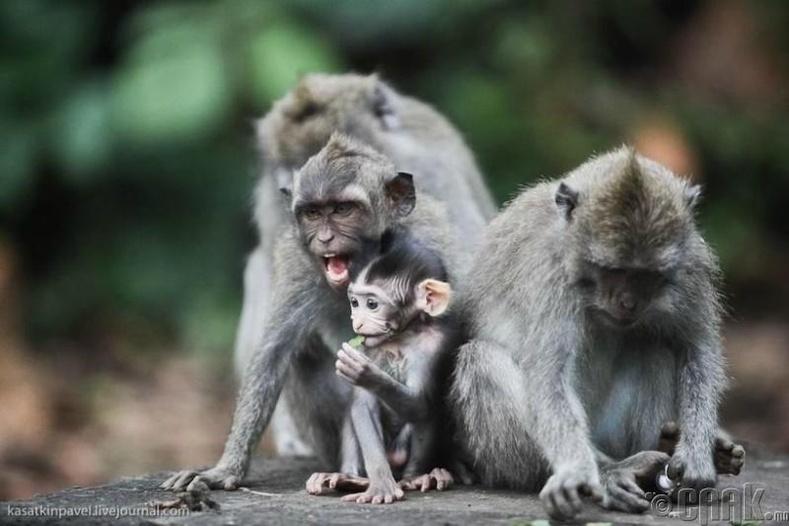 Сармагчин