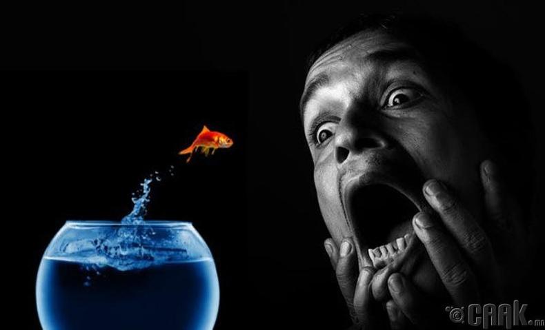 Ихтофобия- Загаснаас айх