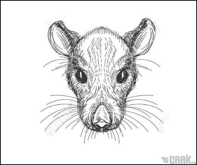 Хулгана жилтнүүдийн зан араншин