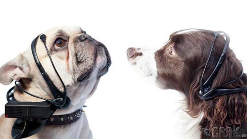 Нохойны хэлийг орчуулагч