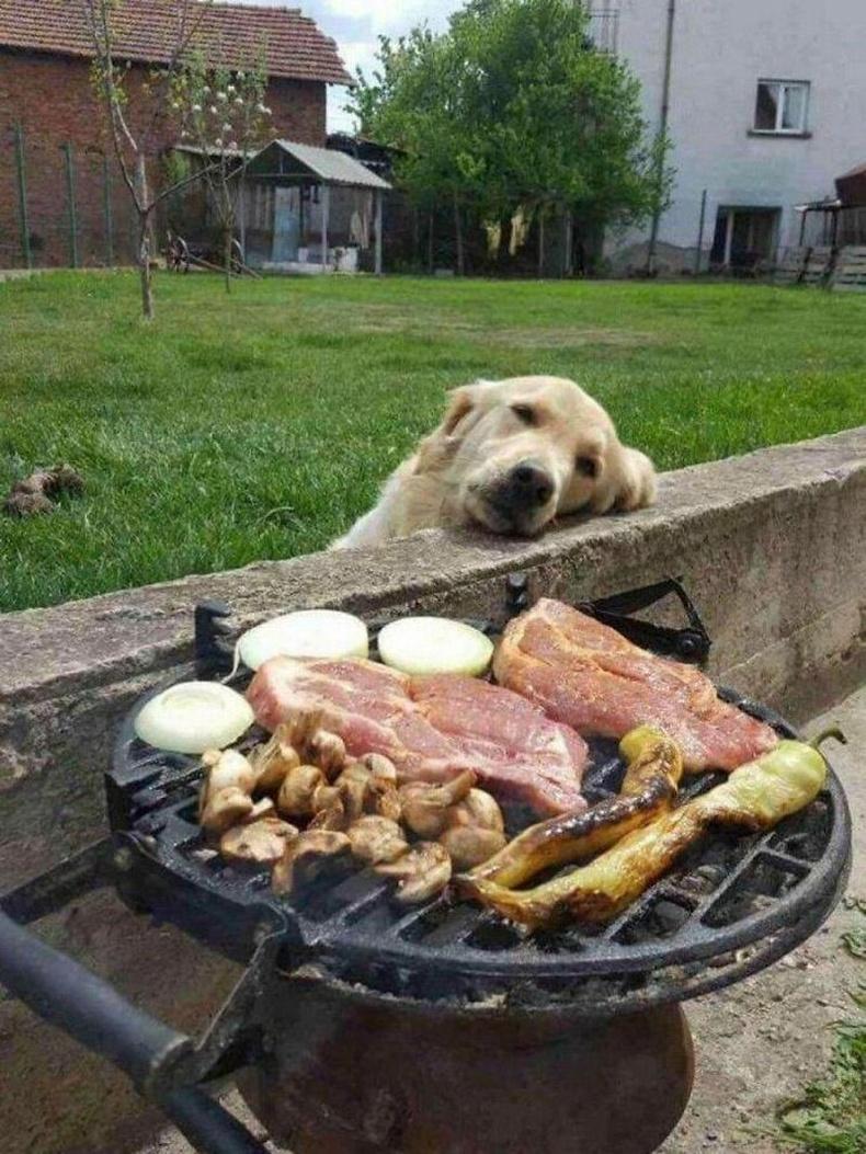 Нохойн мөрөөдөл