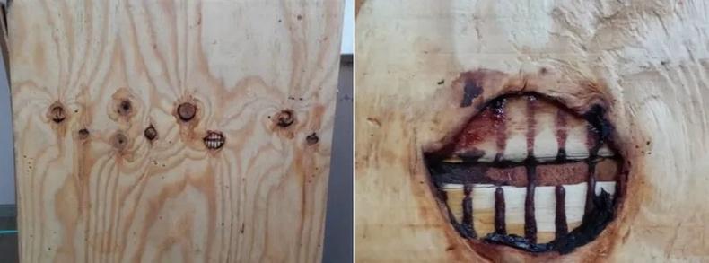 Хананд чих байдгийн адил модонд шүд бий бололтой.