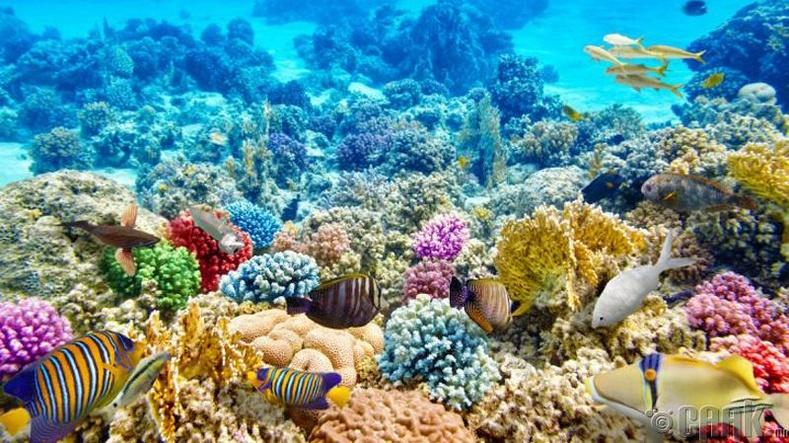 Шүрэн арал бол далайн хүнсний эх үүсвэр