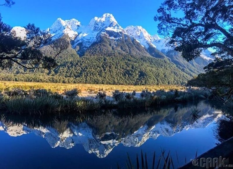 Шинэ Зеландад ирээд шууд бүх ачаагаа шалгуулах ёстой