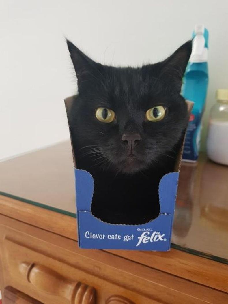 """Муурыг """"ачаалж байна"""""""