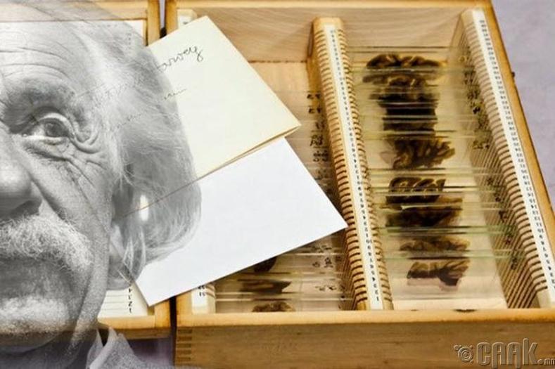 Алберт Эйнштейний (Albert Einstein) тархи