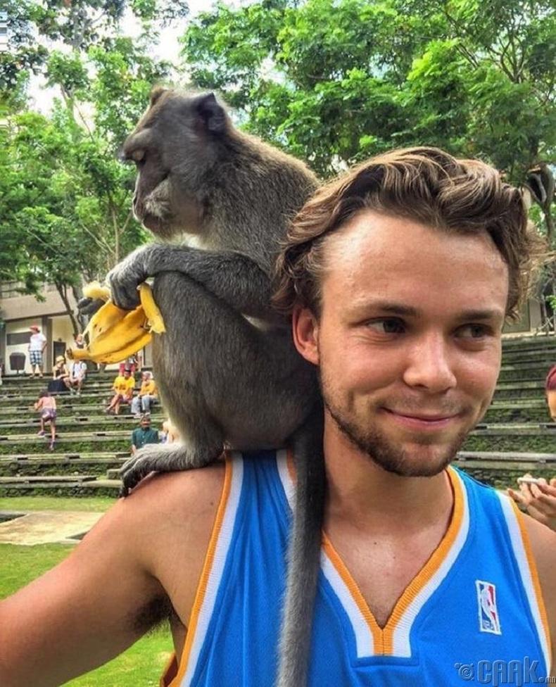 Сармагчин хооллох