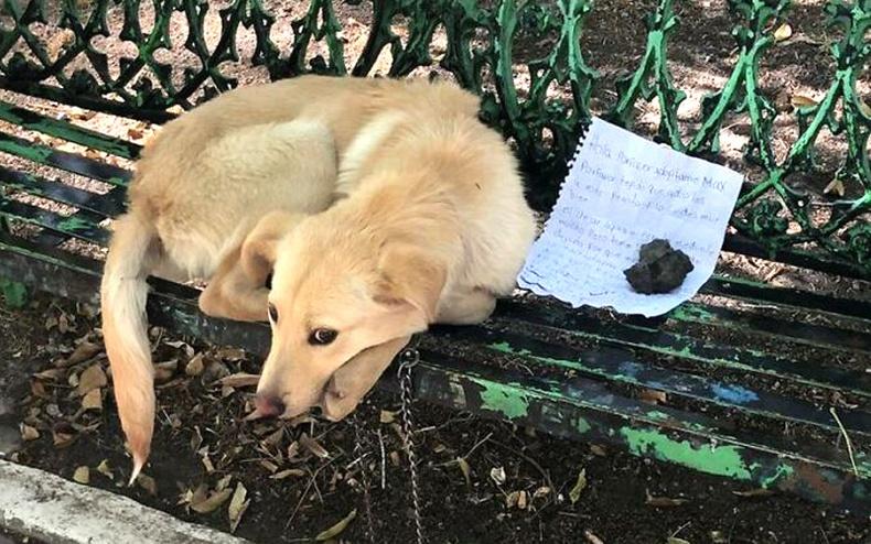 Өрөвдмөөр үгтэй захиа бичиж үлдээгээд, нохойгоо орхисон жаалын хүсэлт биелжээ