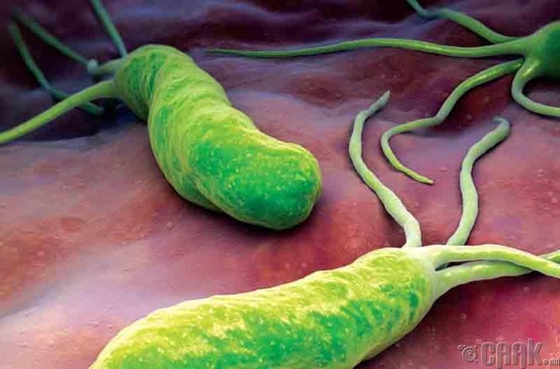 Хамгийн түгээмэл бактерийн халдварууд