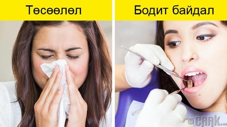 Ханиад дэлхийд хамгийн их тархсан өвчин