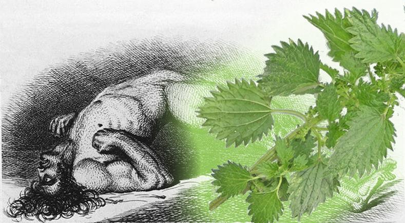 Хатгуулсан хүнийг амиа хорлоход хүргэдэг дэлхийн хамгийн аюултай ургамал - Австрали халгай