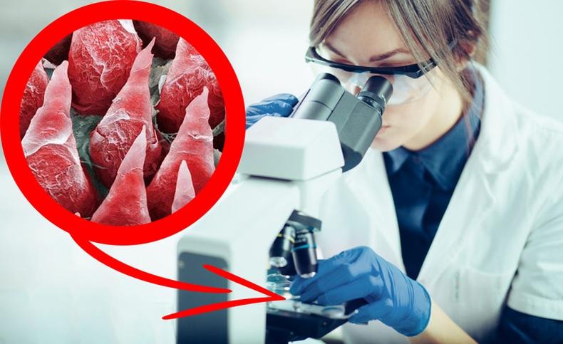 Хүний бие микроскопын дуранд яаж харагддаг вэ?