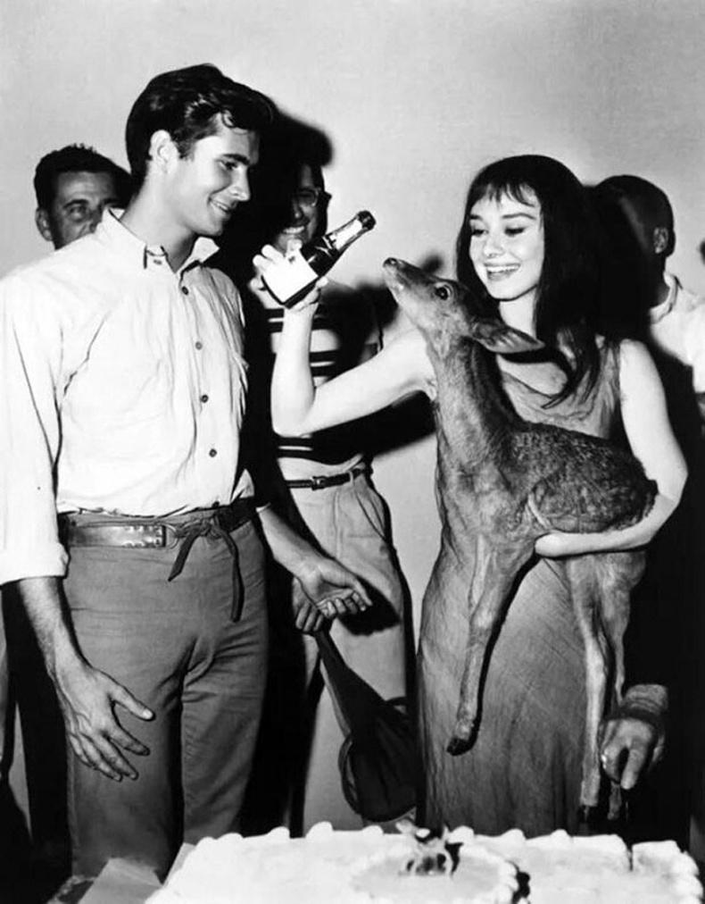 Одри Хепберн өөрийн тэжээвэр янзага Пиппиний хамт, 1959