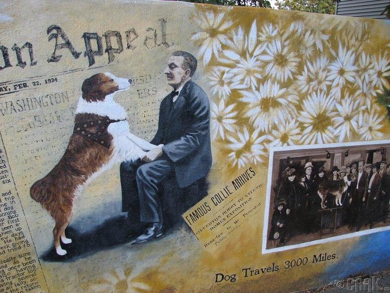 Гайхамшигт нохой Бобби: Гэртээ ирэх гэж 4500 км зам туулсан