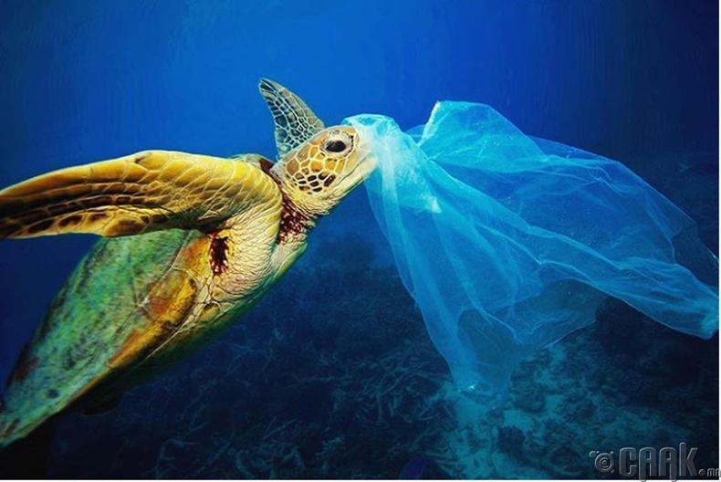 Уутыг далайн хөвөгч гэж андуурдаг амьтад олон бий