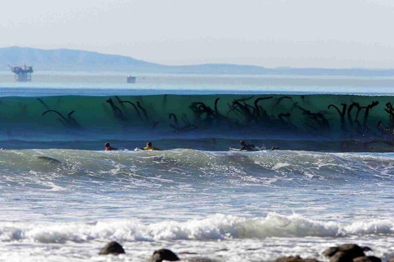 Аймшгийн киноны хэсэг биш, жирийн далайн замагнууд