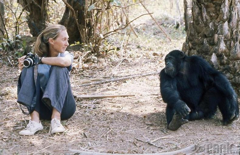 Хүмүүсийн ойлголтыг өөрчилсөн шимпанзе