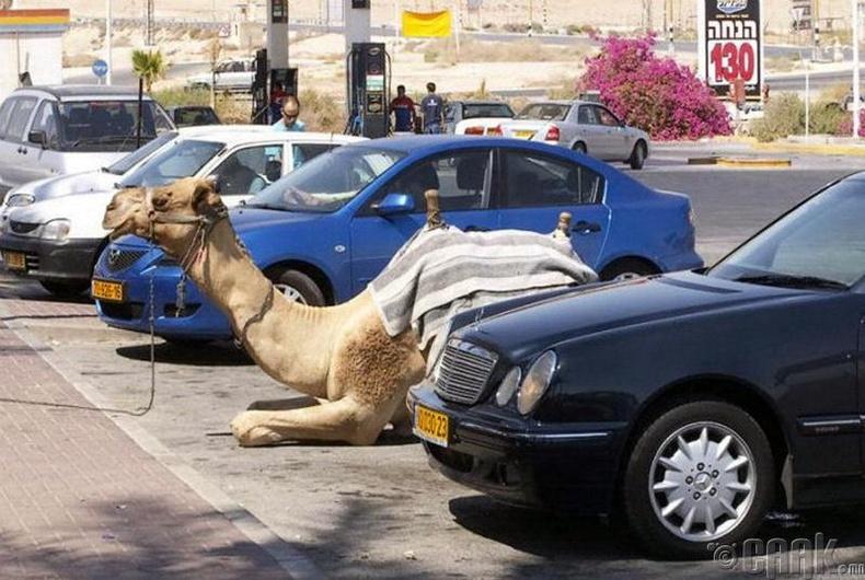 Ямар ч тээврийн хэрэгсэлтэй байсан заавал зогсоол дээр тавих ёстой
