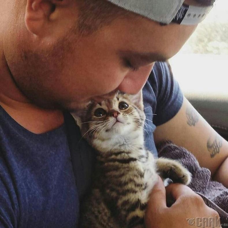 Муур эзнээ том муур мэтээр хүлээж авдаг