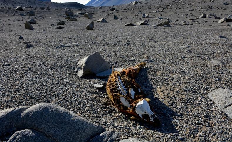 Хоёр сая жилийн турш бороо, цас ороогүй дэлхийн хамгийн хуурай газар (35+ фото)