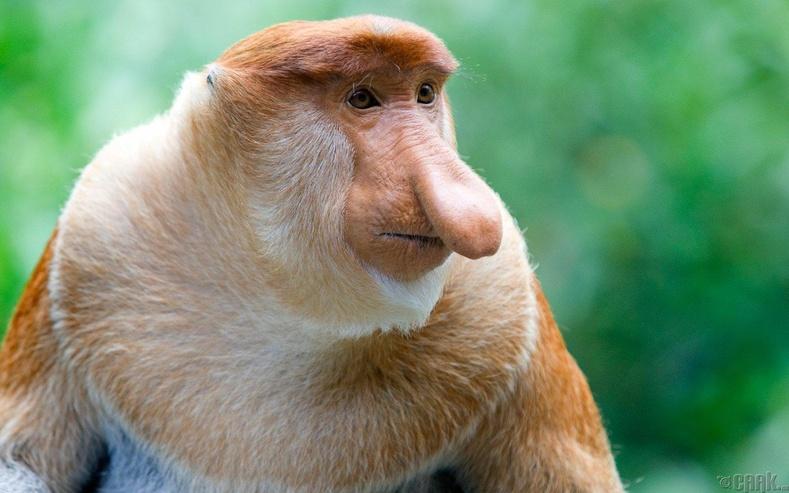 Том хамарт сармагчин
