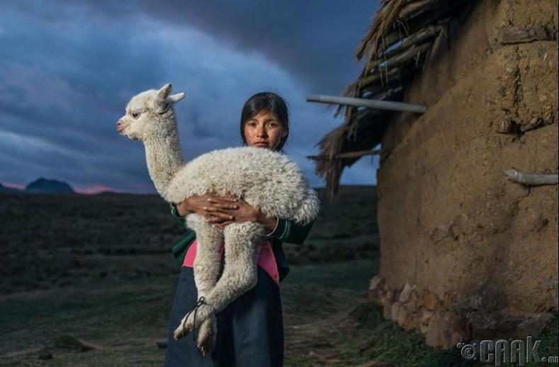 Перу охин лам гөрөөсний хамт
