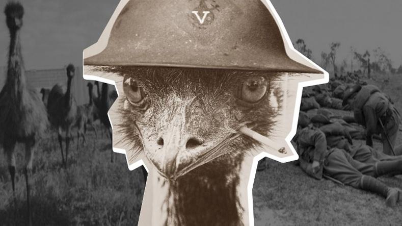 """Австраличууд """"эмү"""" шувуутай дайтаад ялагдсан түүх"""