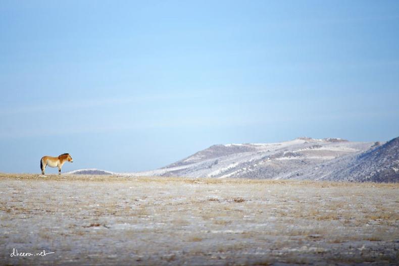 Монголын өвөл гадны зурагчны нүдээр...