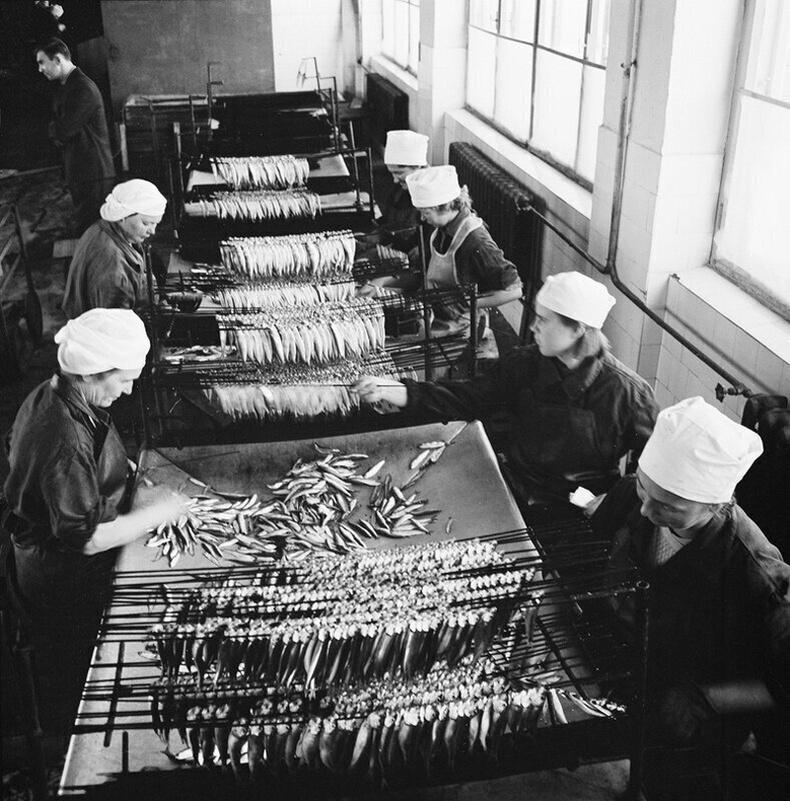 Эстони улс дахь лаазалсан загасны үйлдвэр - 1950-аад он