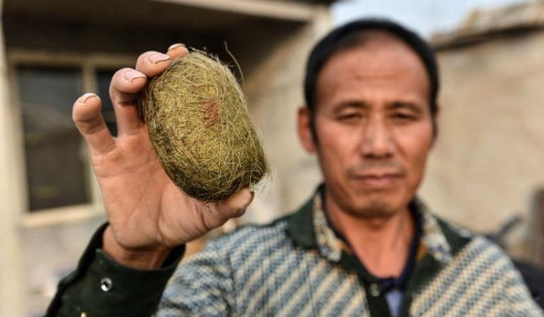 """Хятад эр гахайн цөснөөс 600 мянган долларын үнэтэй """"эрдэнэ"""" олжээ"""